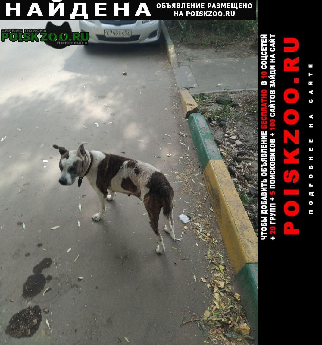 Найдена собака ленинский район Нижний Новгород