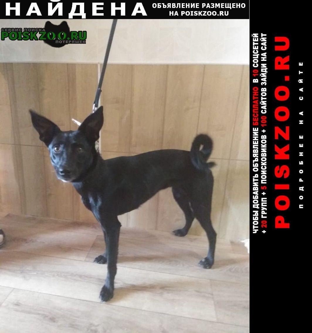 Найдена собака метис девочка Москва