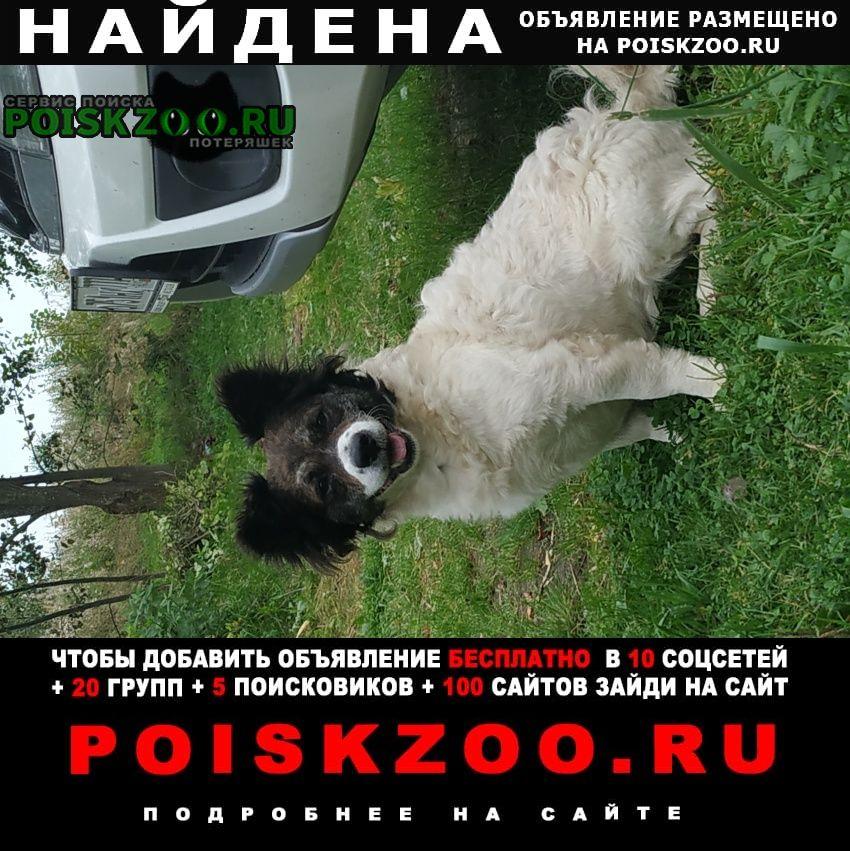Найдена собака Высоковск