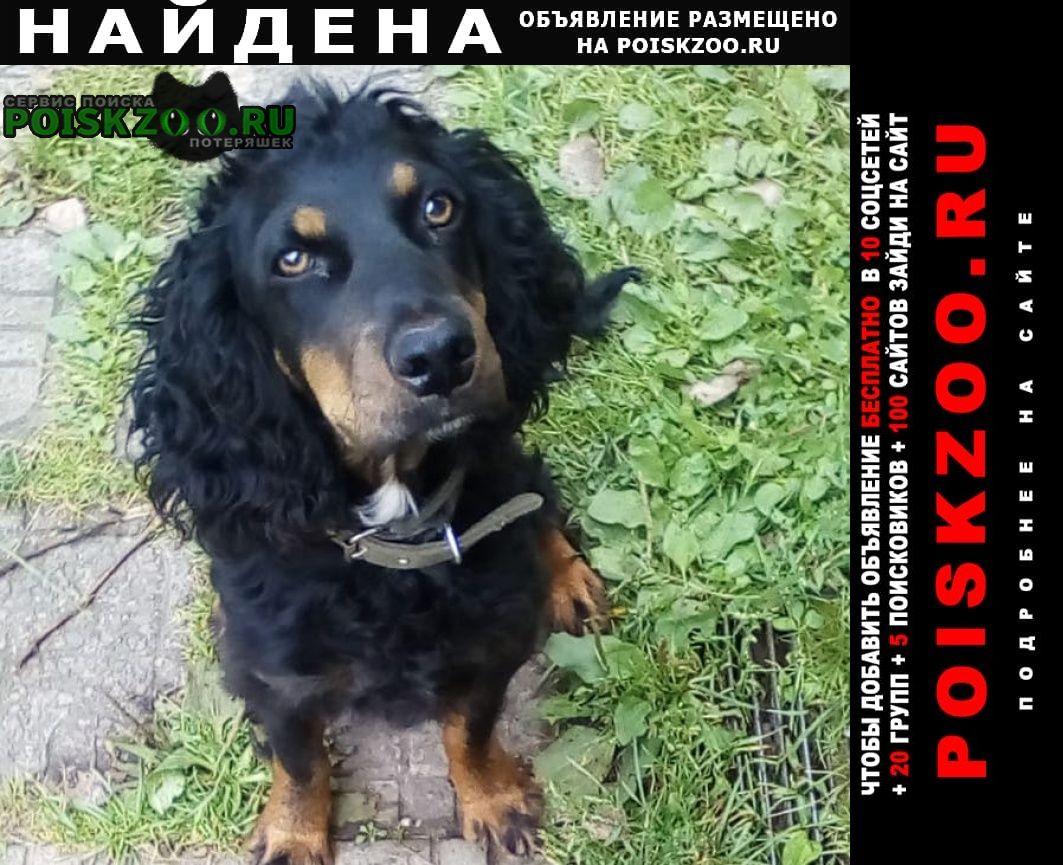 Найдена собака спаниель Куровское