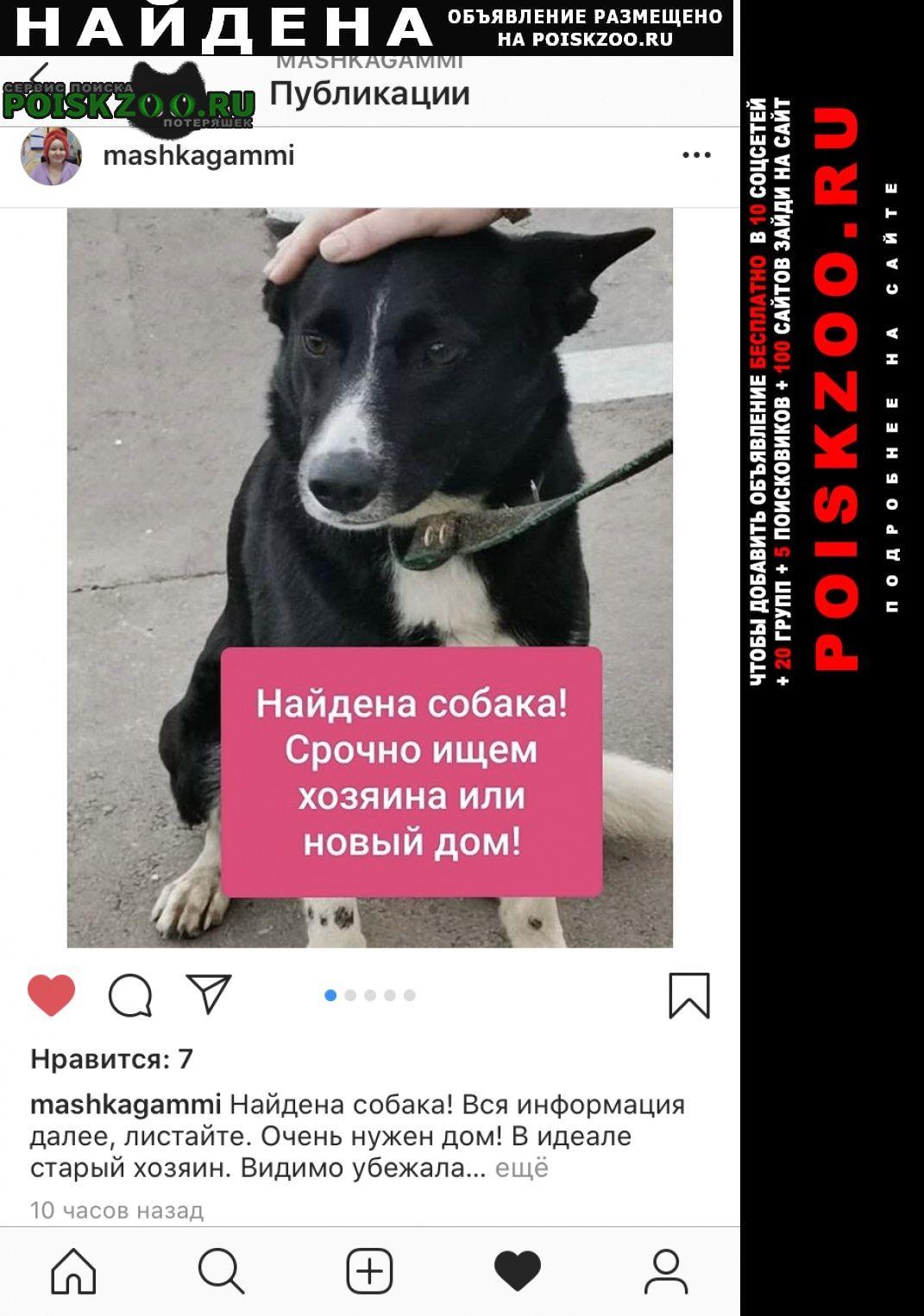 Найдена собака -кабель Москва