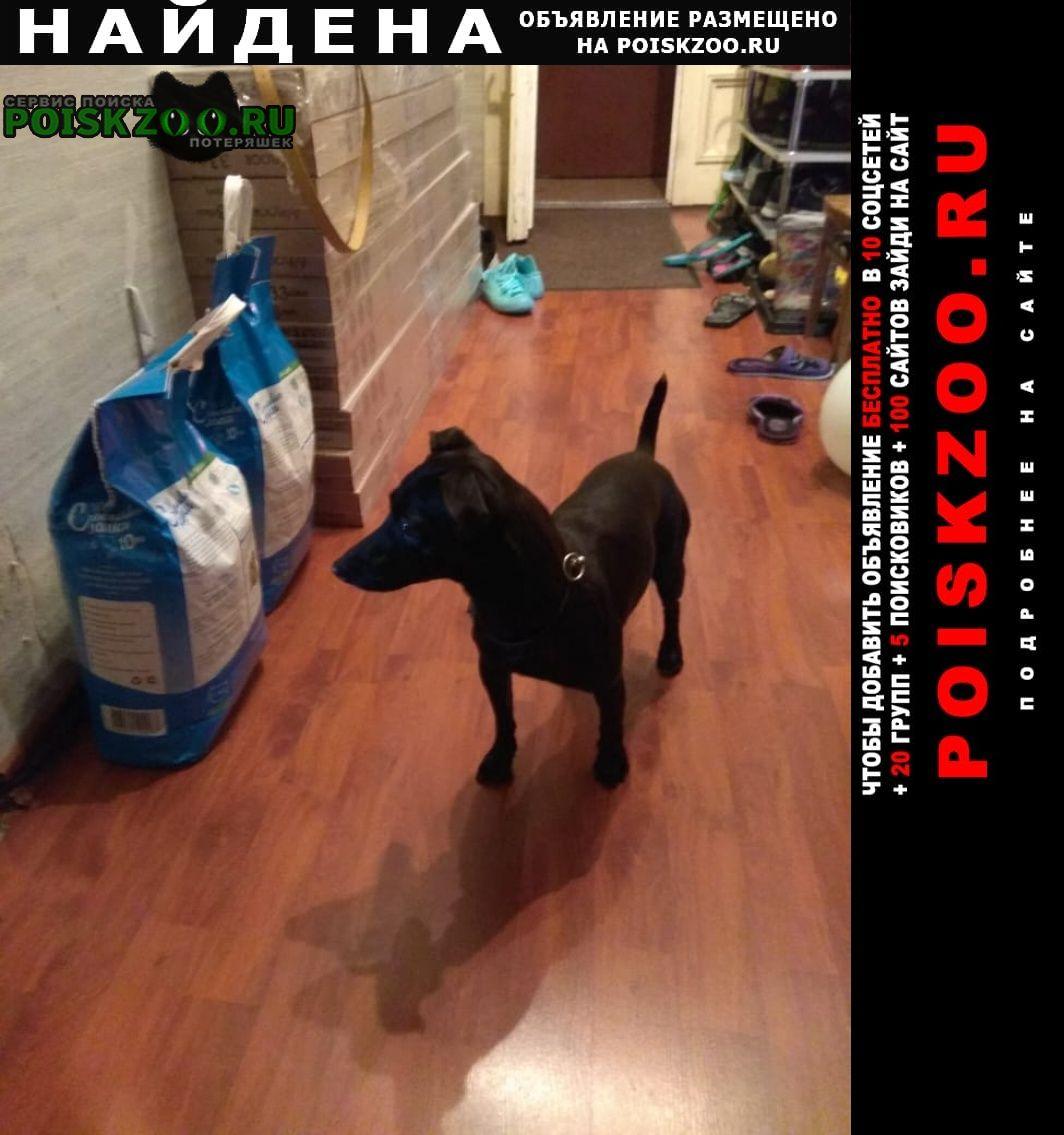 Найдена собака чёрная собачка Санкт-Петербург