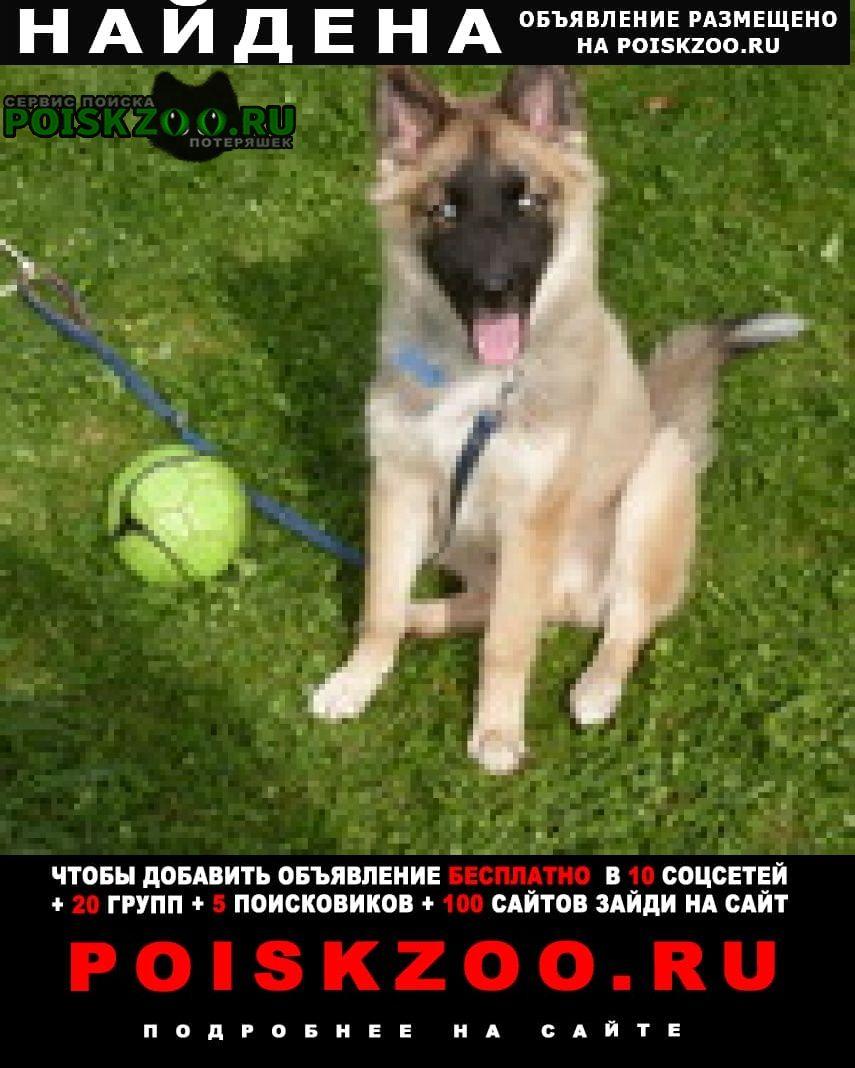 Найдена собака Кострома