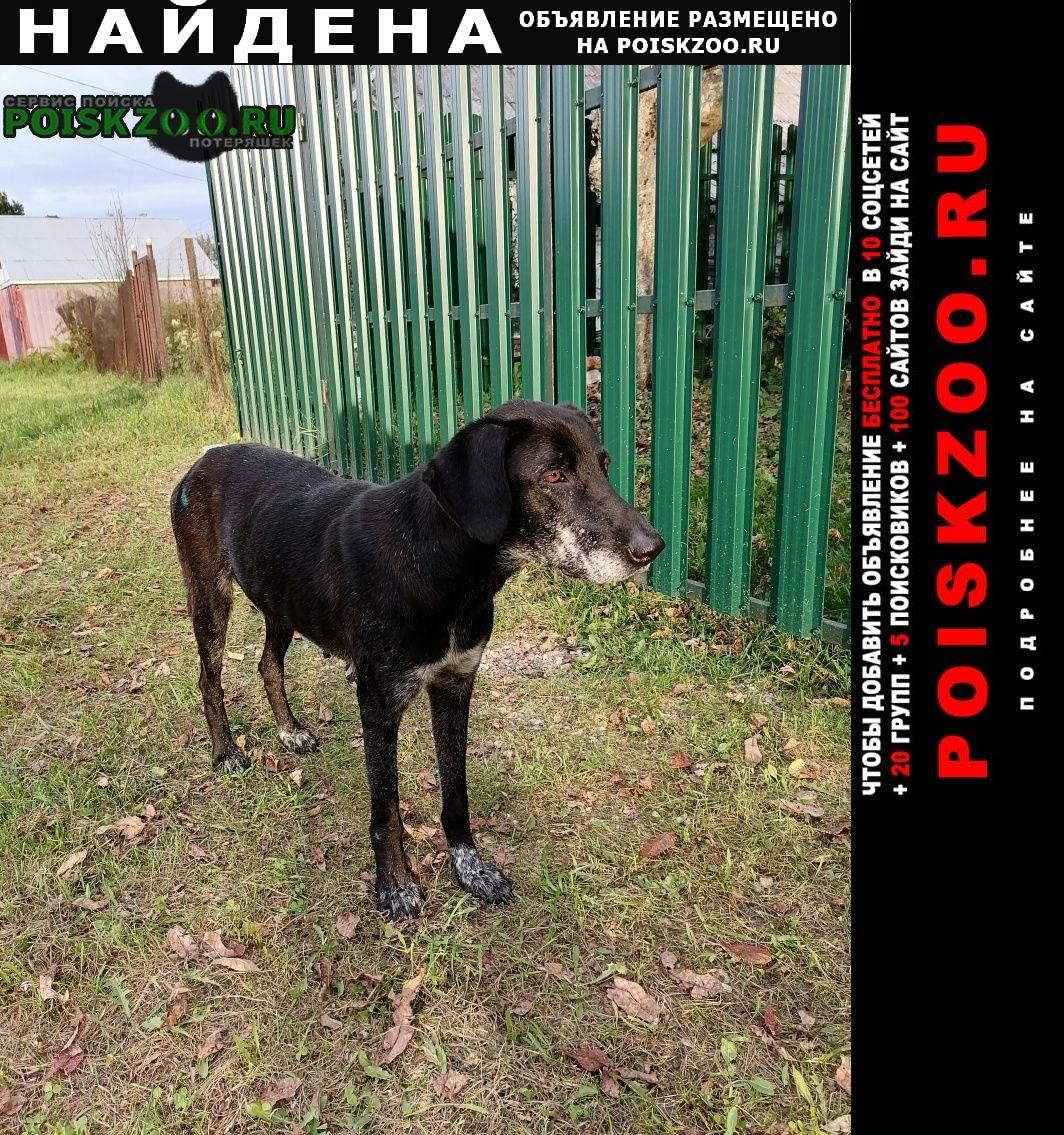 Найдена собака деревня лесково Егорьевск