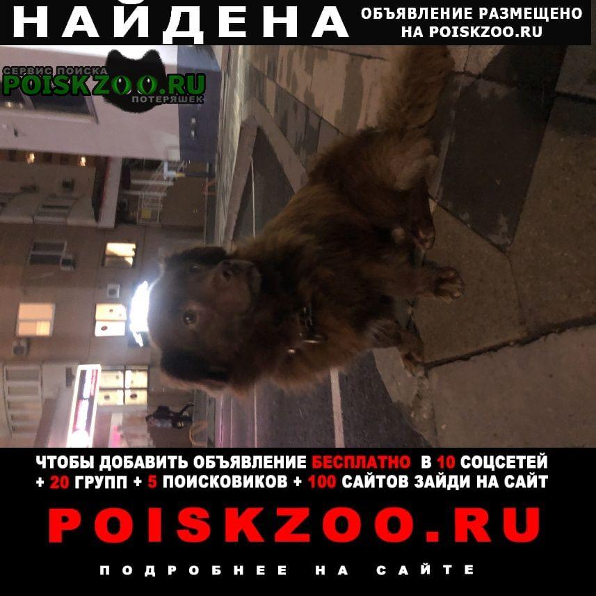 Найдена собака коричневая, черный ошейник Краснодар