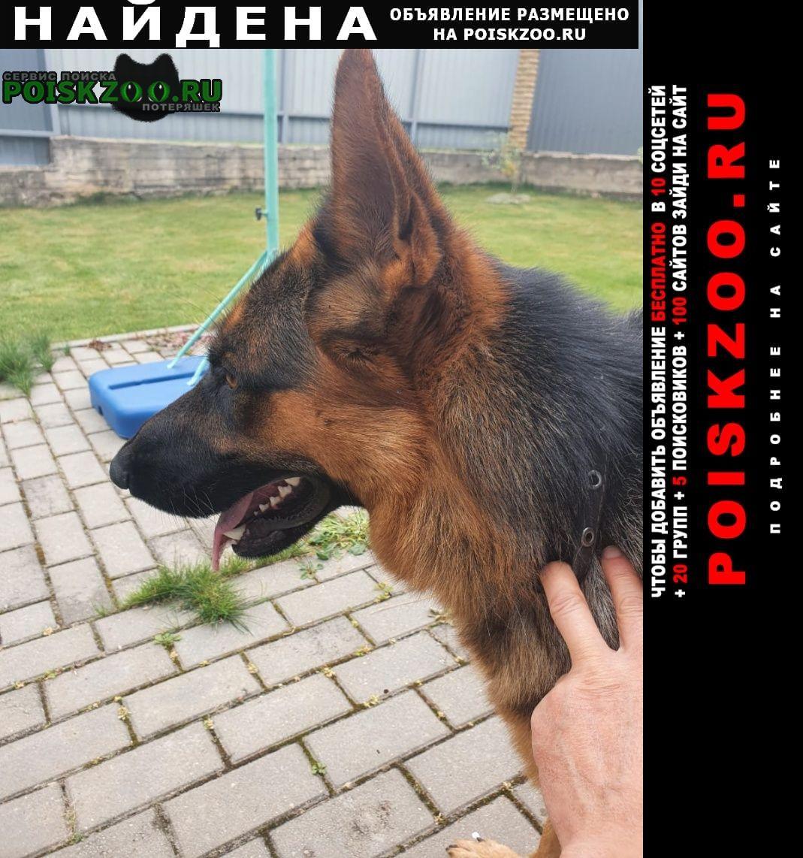 Найдена собака Балабаново