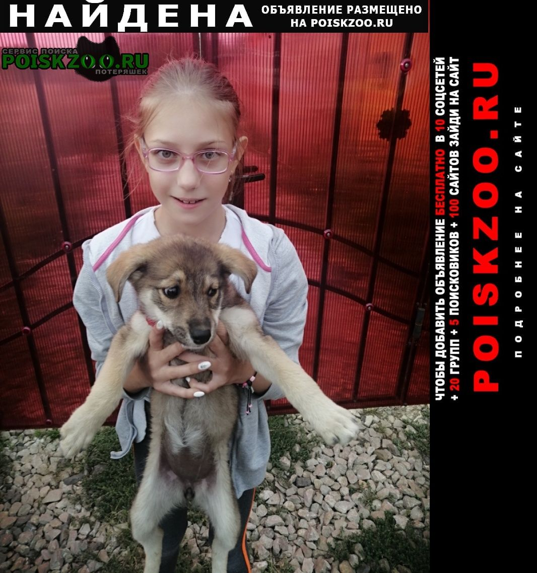 Найдена собака Калуга
