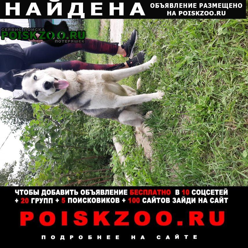 Найдена собака гуляла в ошейнике Иваново