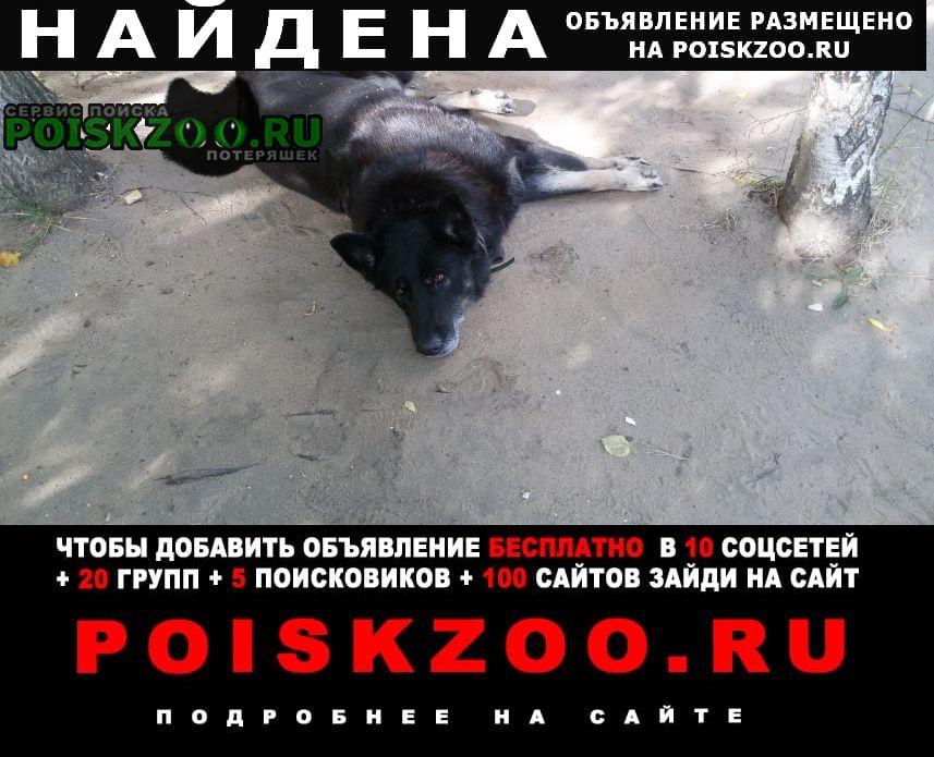 Найдена собака большая черная Красково