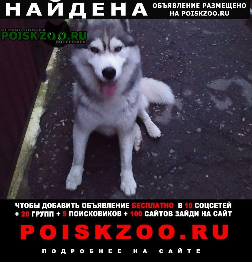 Найдена собака Майкоп (Адыгея)