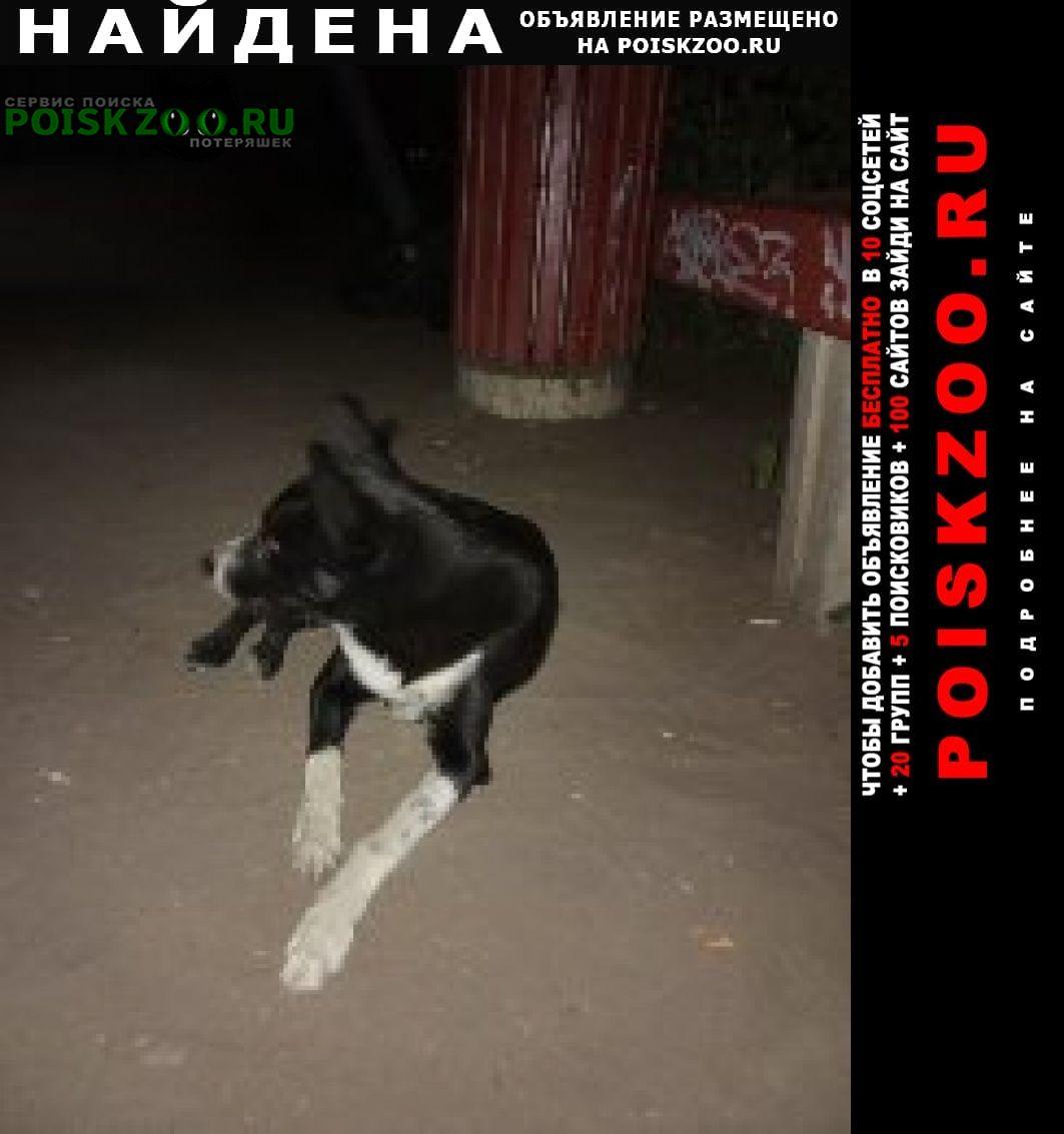Найдена собака живёт во дворе под лавкой. Саратов