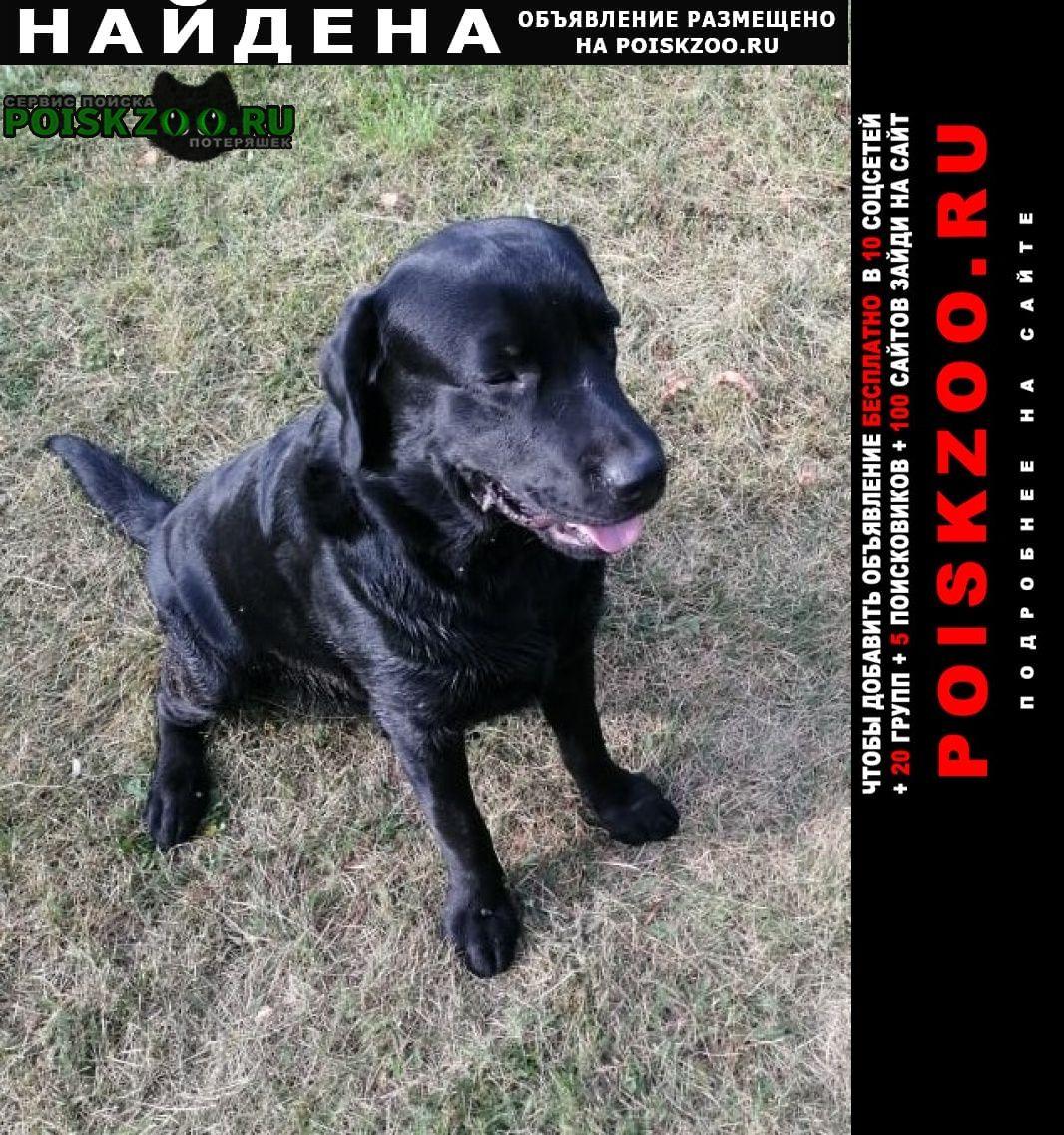 Найдена собака замечен черный молодой лабрадор Озеры
