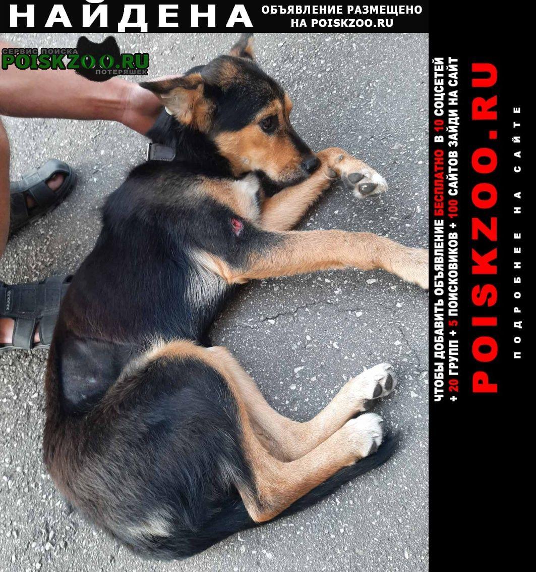 Найдена собака верхние печеры, ул.богдановича Нижний Новгород