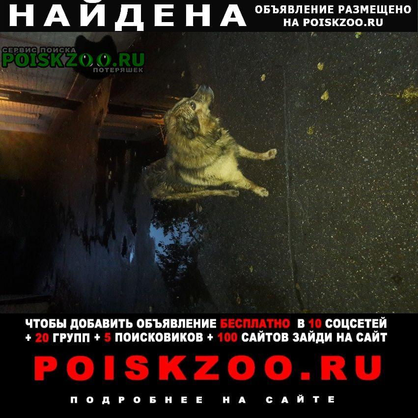 Найдена собака полярная, конечная трамвая Москва
