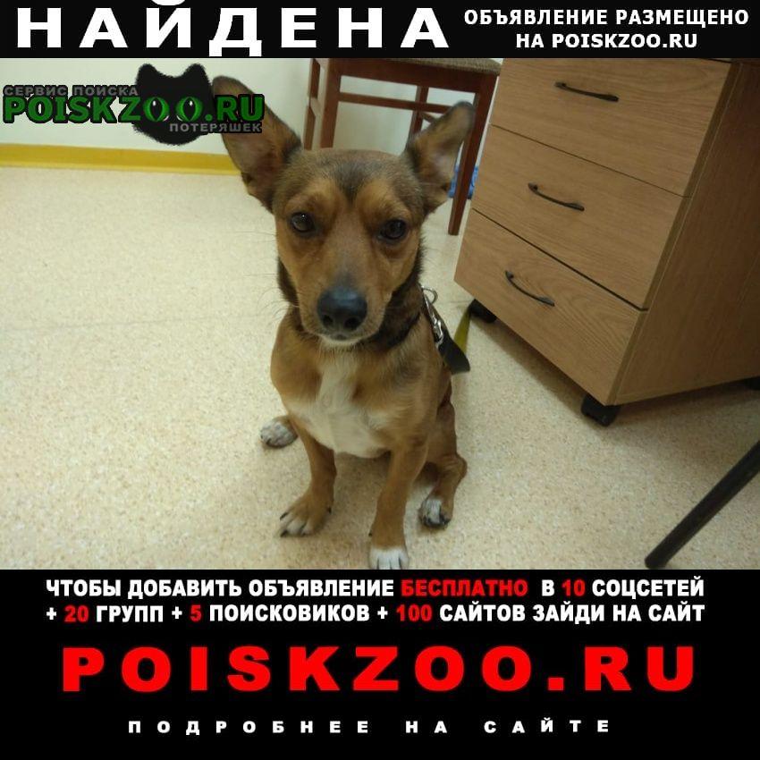 Найдена собака Красногорск