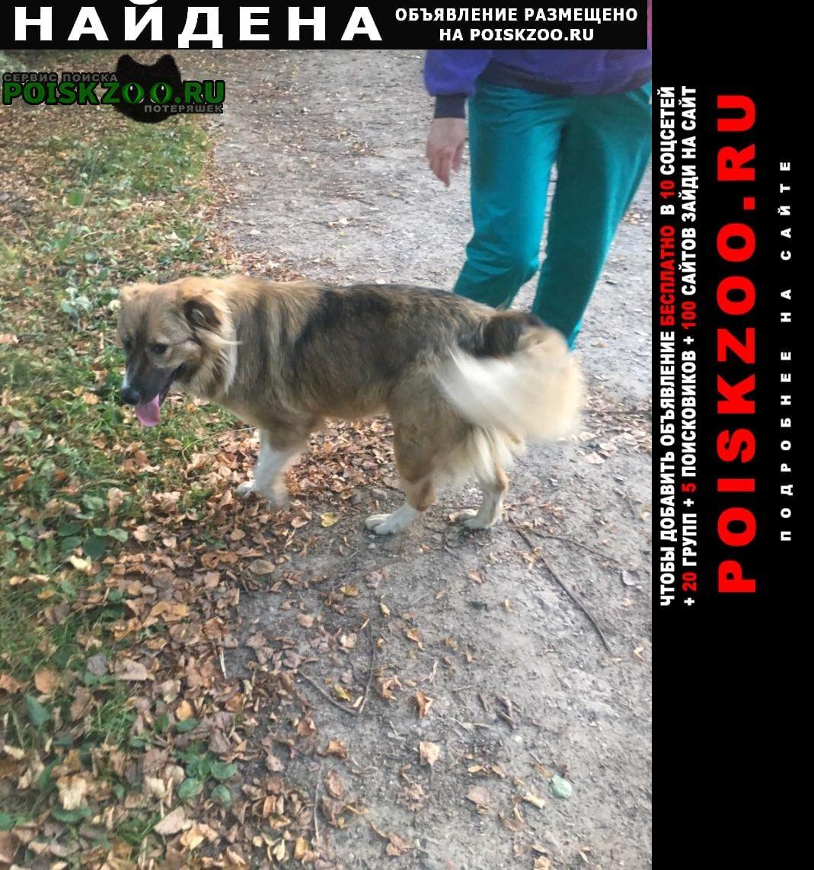 Найдена собака в зеленом ошейнике Правдинский