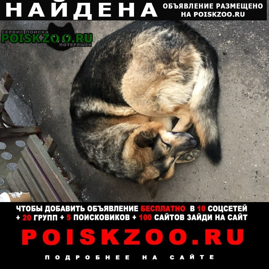 Найдена собака трасса на аэропорт домодедово Видное