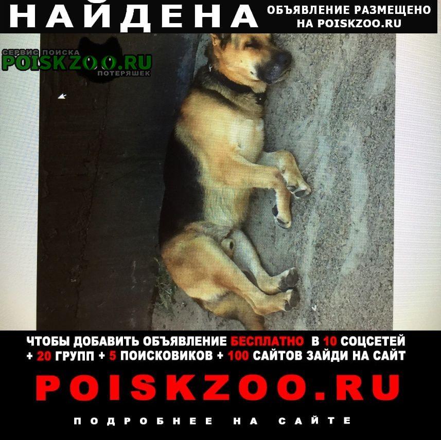 Найдена собака овчарка. джемете Анапа