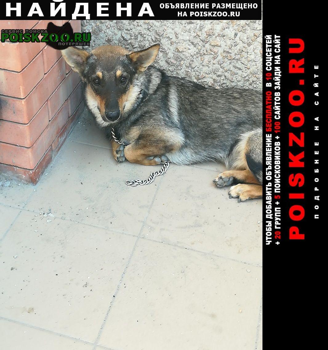 Найдена собака собачка с оборванной цепью Ростов-на-Дону