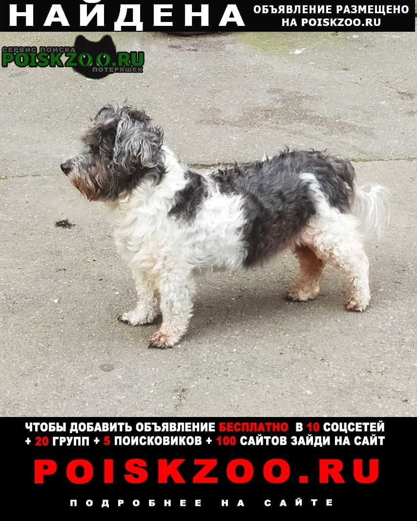 Найдена собака на улице турку небольшой пес Санкт-Петербург