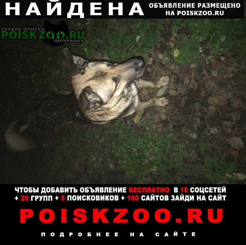 Найдена собака в кожаном широком ошейнике Бронницы