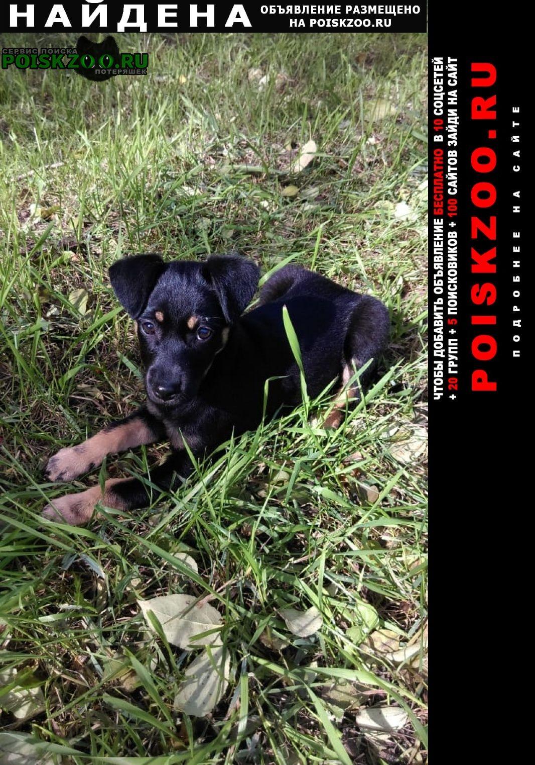 Найдена собака щенок девочка здоровая ухоженная Новосибирск
