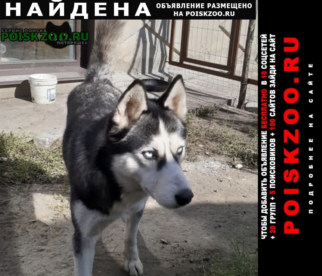 Найдена собака Омск