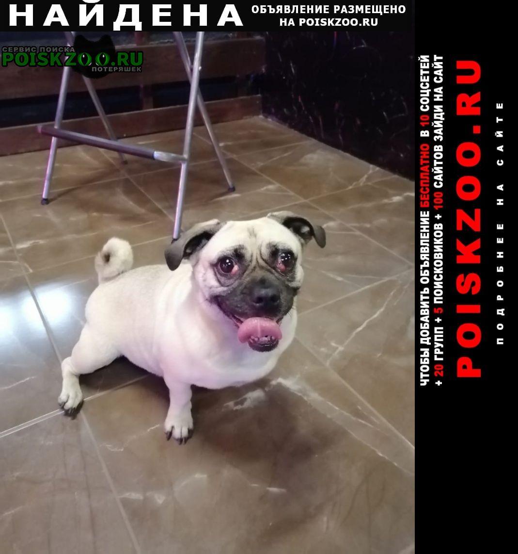Найдена собака.. Иркутск