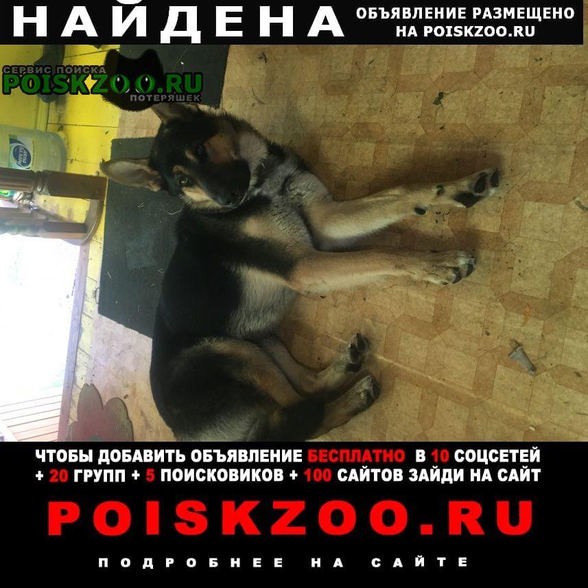 Найдена собака овчарка Сысерть