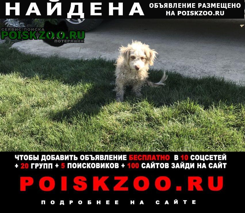 Найдена собака на 3 квартале, Кореновск