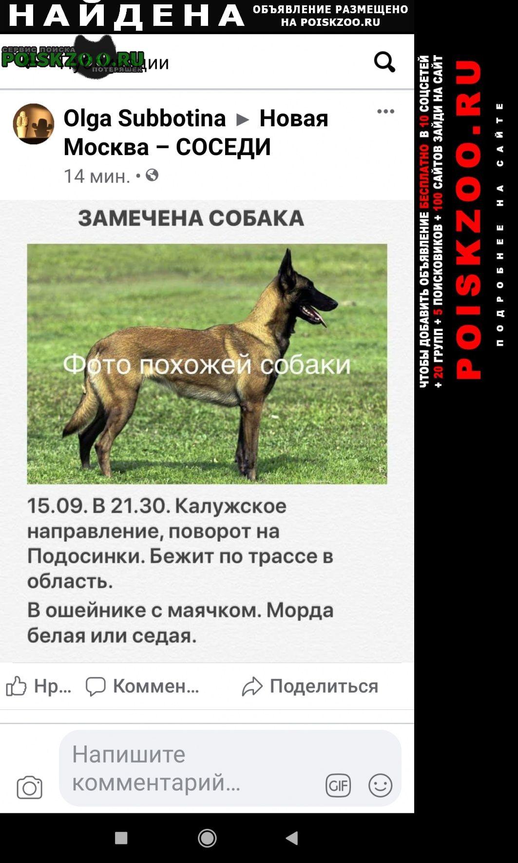 Найдена собака замечена, похожая на бельгийскую Москва