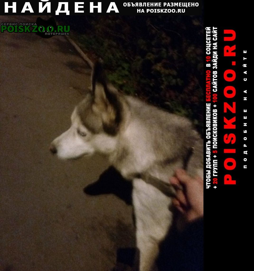 Найдена собака щенок хаски Новомосковск