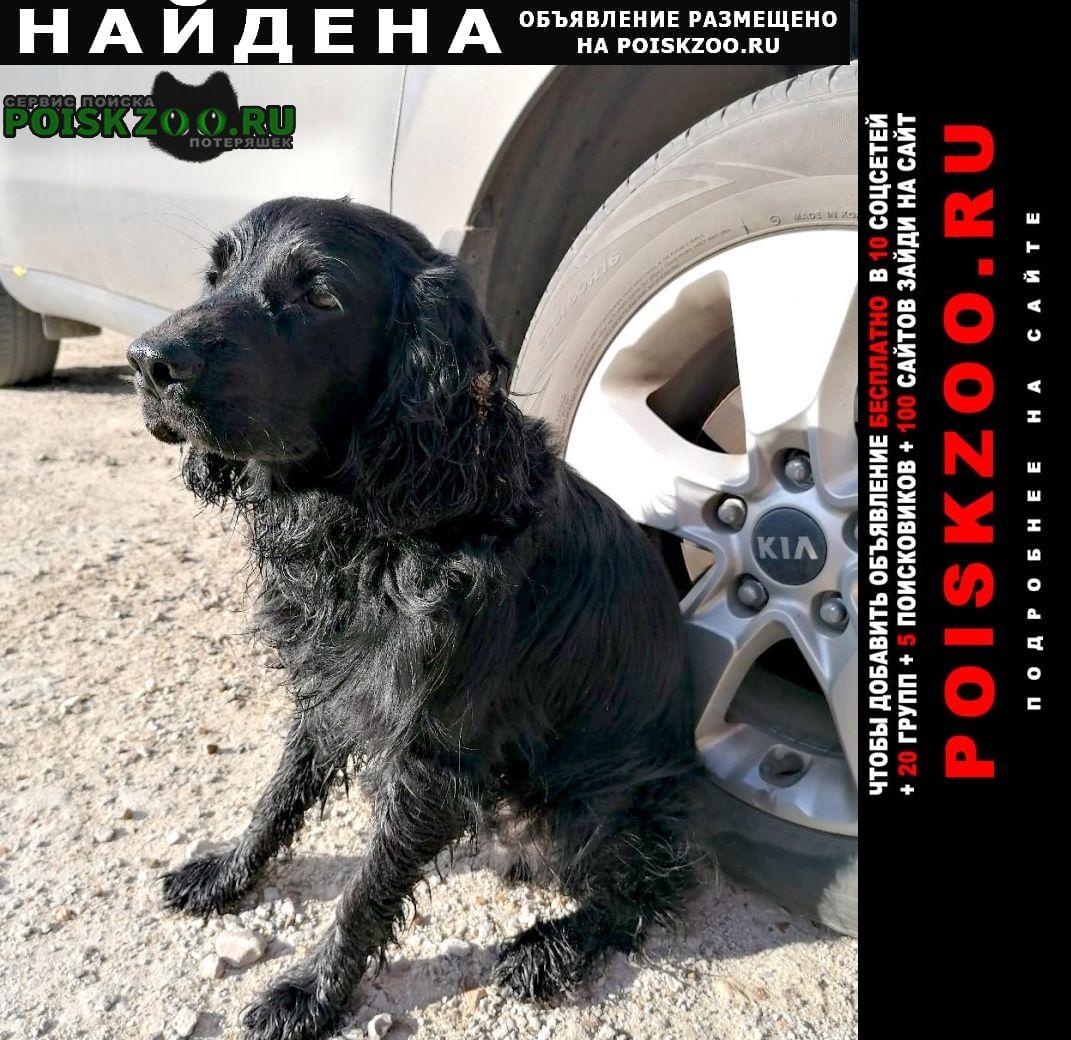 Луховицы Найдена собака спаниель
