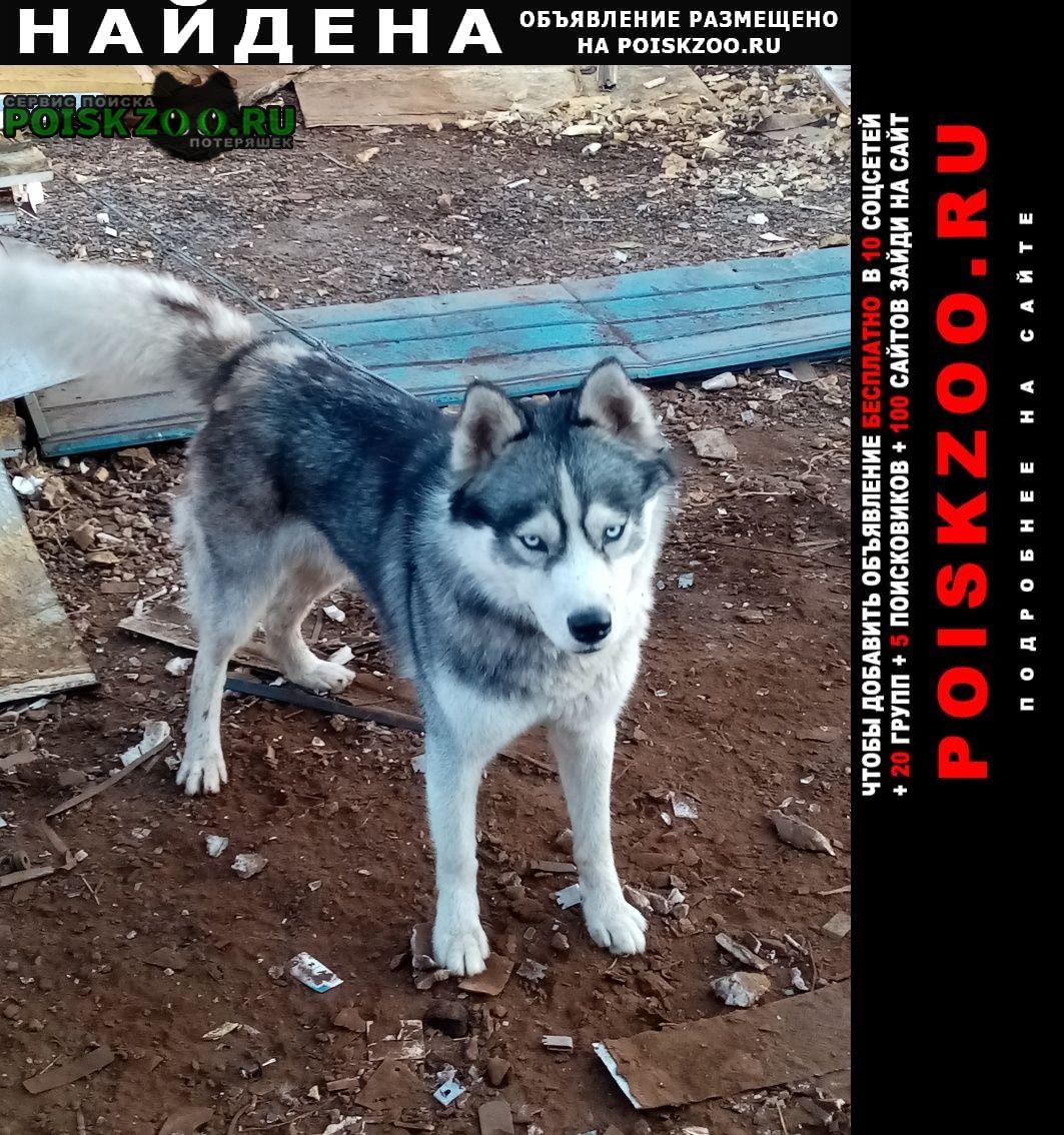 Найдена собака.. Таганрог