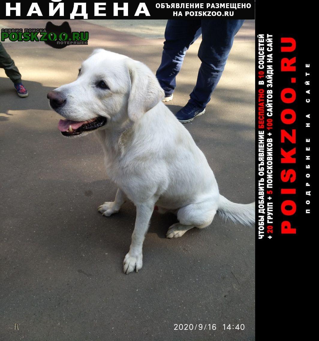 Найдена собака нашли собаку Москва
