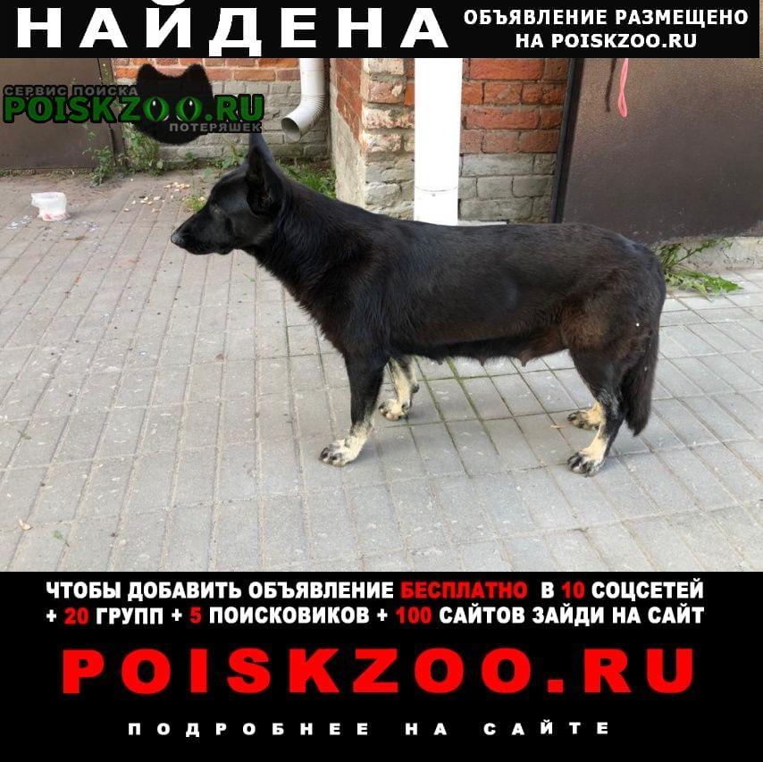 Яхрома Найдена собака