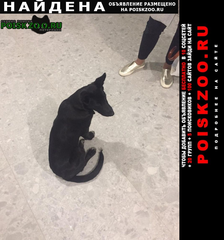 Самара Найдена собака