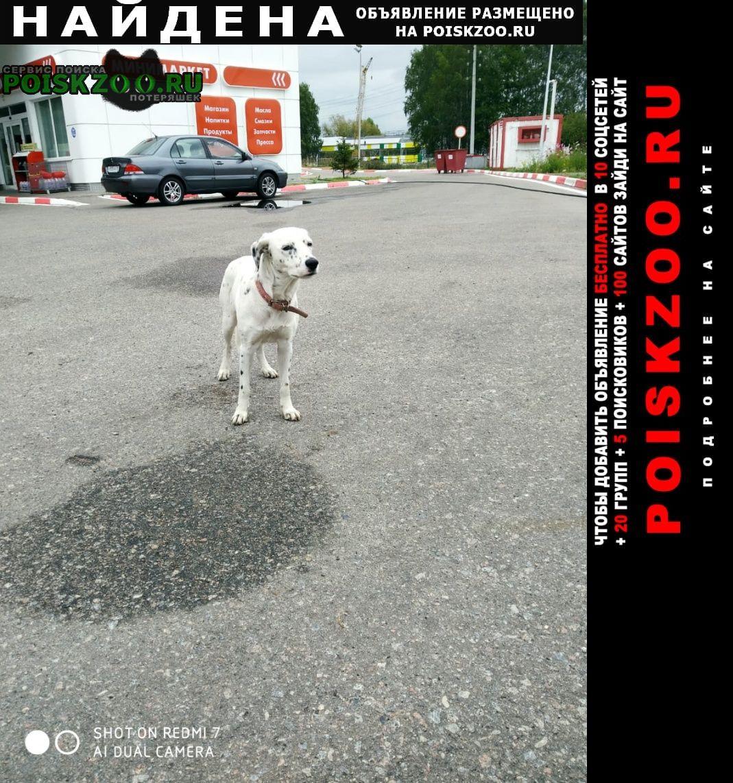 Каменка Найдена собака
