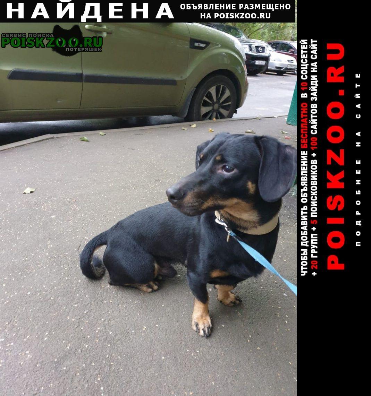 Найдена собака чёрная такса Москва
