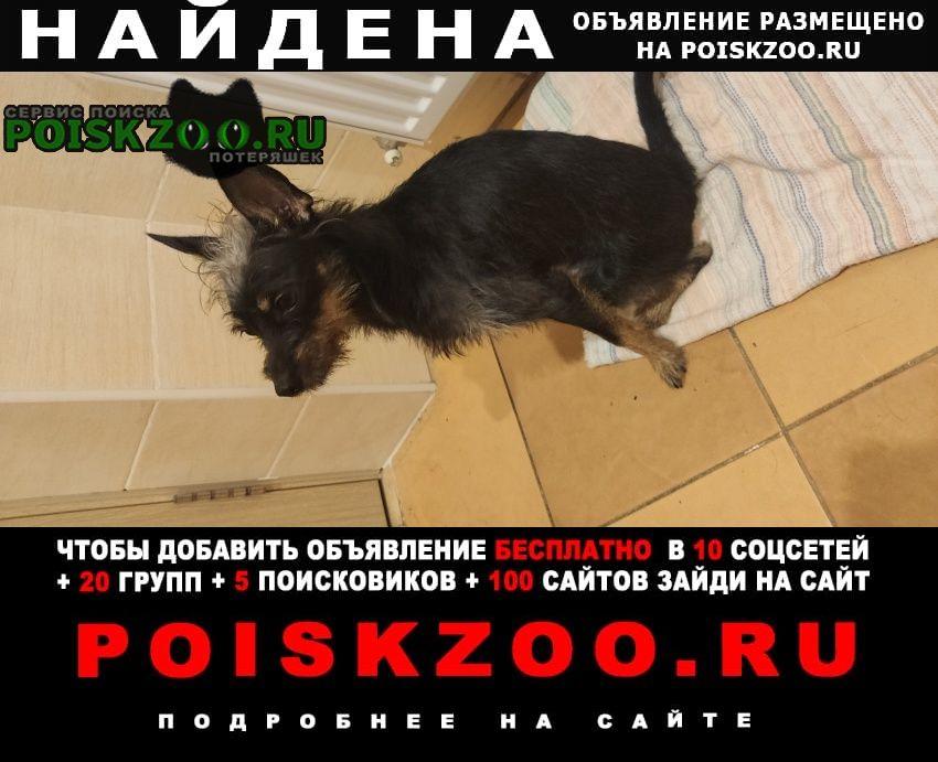 Найдена собака пес Шереметьевский