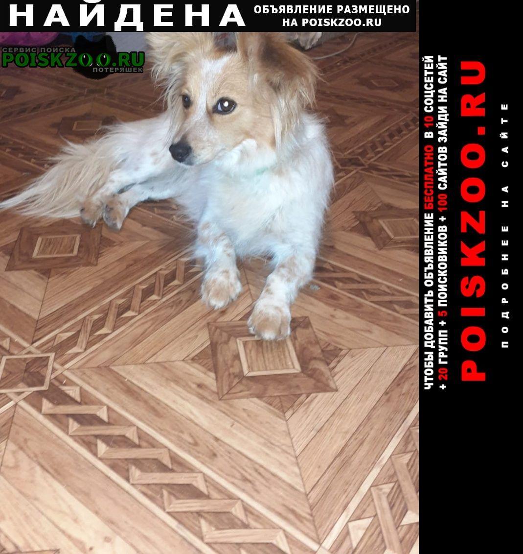 Найдена собака помогите Белгород