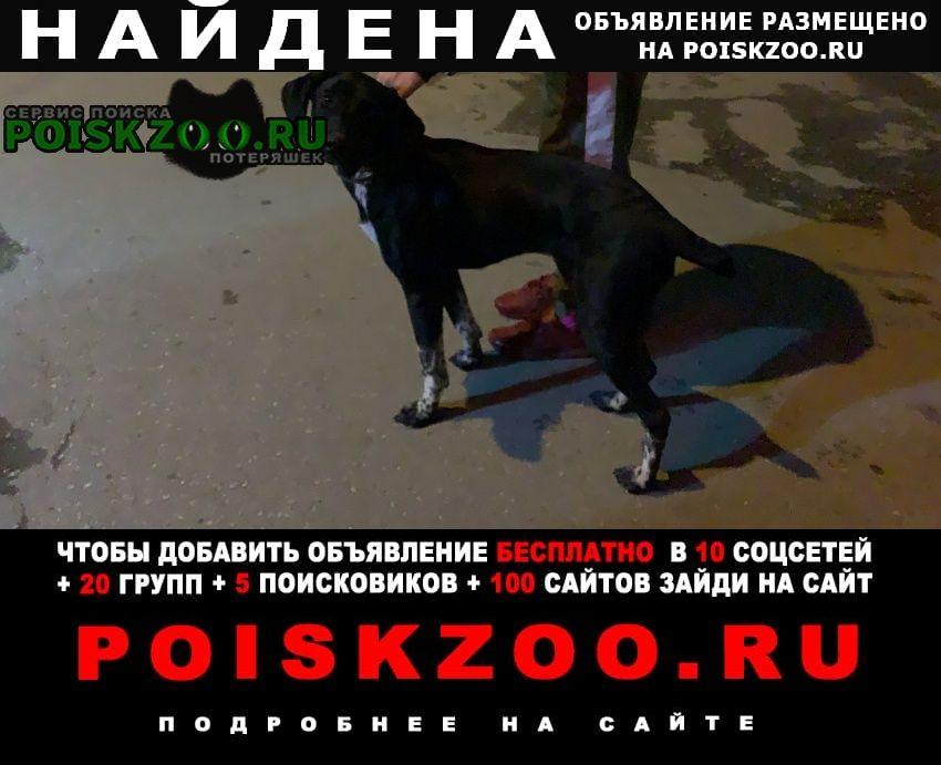 Новосибирск Найдена собака