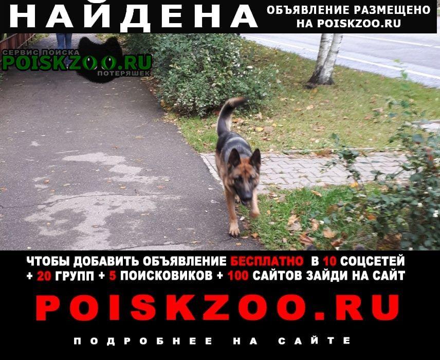 Найдена собака овчарка, девочка Красногорск