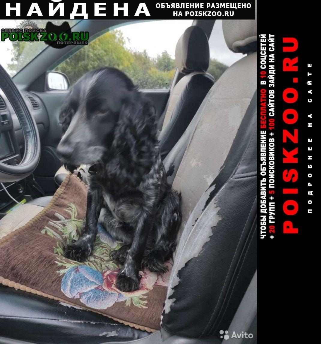 Найдена собака спаниель мамыри сосенское Москва