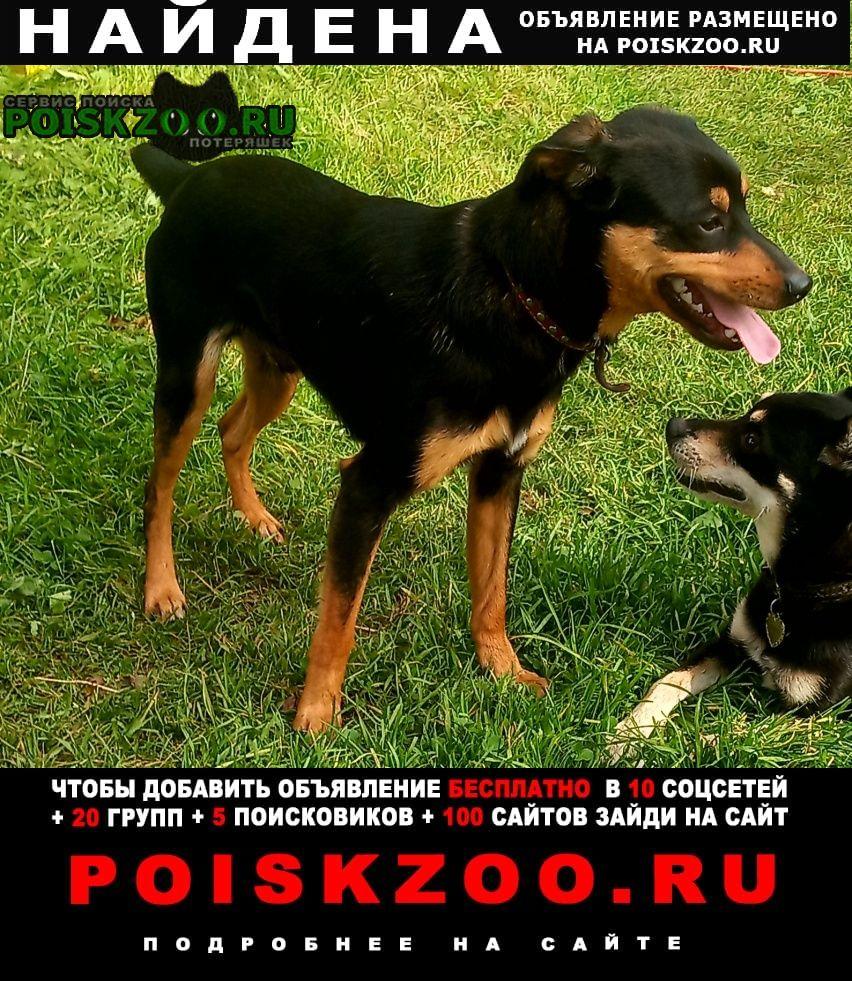 Среднеуральск Найдена собака