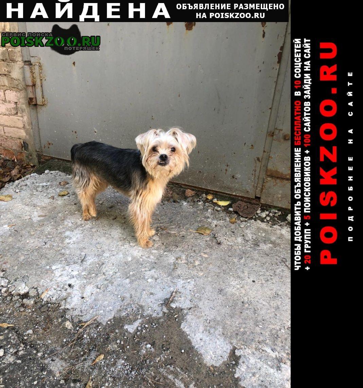 Найдена собака Серпухов