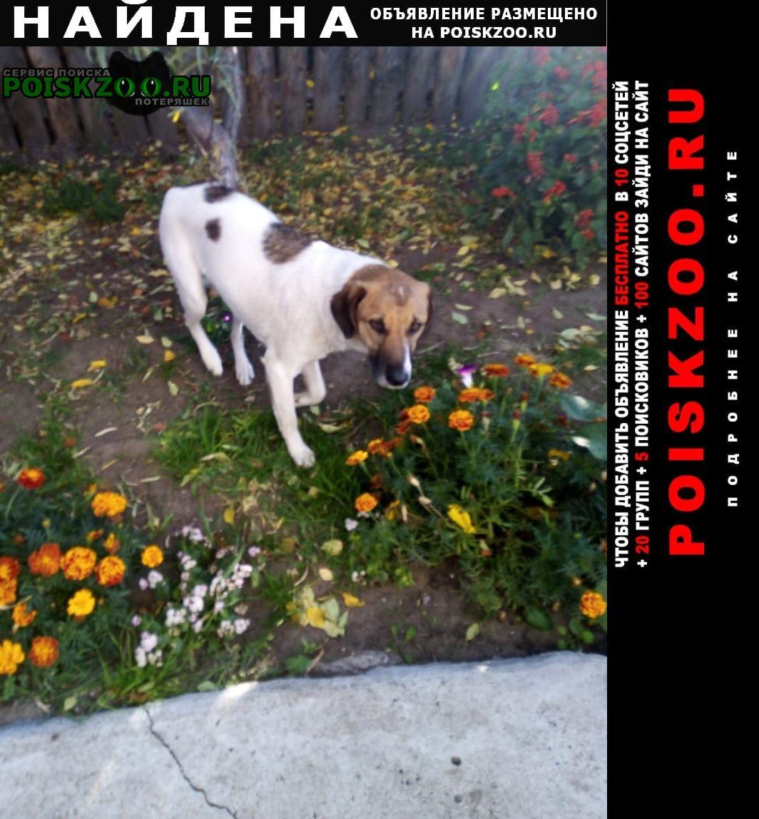 Рубцовск Найдена собака может кто ищет?
