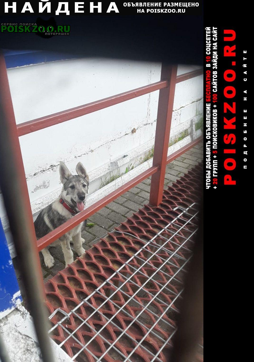 Найдена собака cос Тверь