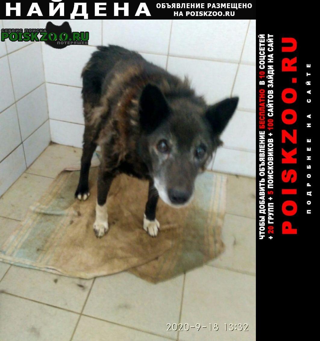 Найдена собака в отлове старый пес мотовилиха Пермь