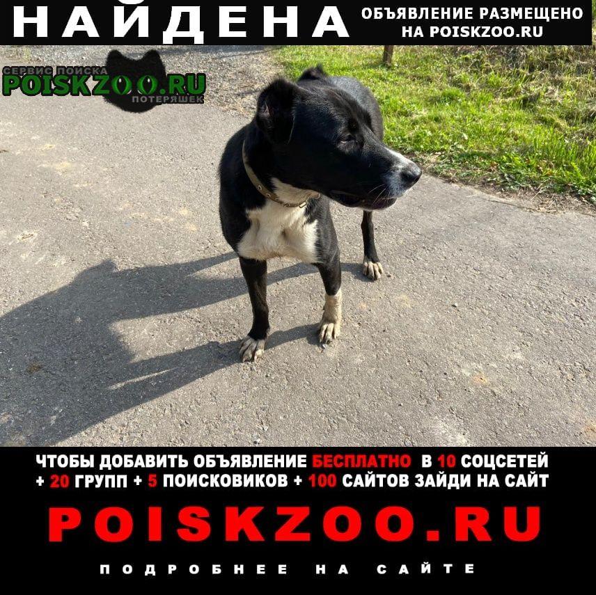 Дмитров Найдена собака